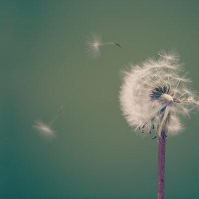Introducing Mindfulness Mondays